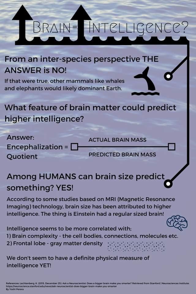 Brain Size