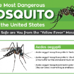 The Most Dangerous Mosquito in the United States