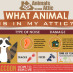 What Animal Is In My Attic?