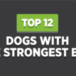 Top 12 Dogs With The Strongest Bite
