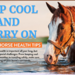 Keep Cool and Carry On: Summer Horse Health Tips