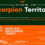 Living in Scorpion Territory