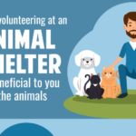 Why Volunteering at an Animal Shelter is Beneficial to you and the Animals