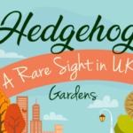 Hedgehogs – A Rare Sight in UK Gardens