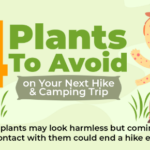 4 Plants to Avoid on Your Next Hike and Camping Trip