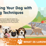 Training Your Dog with Luring Techniques