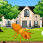 Facts about Termites