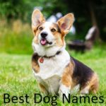 Best Top Dog Names 2019, 2018 and 2017