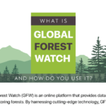 What Is Global Forest Watch and How Do You Use It?