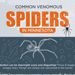 Common Venomous Spiders