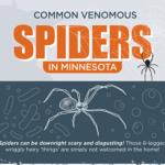 Common Venomous Spiders