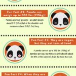 Giant Panda Fun Facts