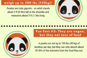 adorable-facts-about-pandas